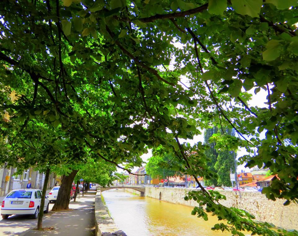Careva ćuprija pod krošnjom (Sarajevo, 25. 06. 2015, foto: Mina Coric)