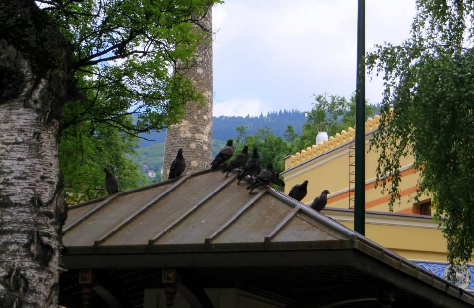 Odmor na krovu (Sarajevo, 25. 06. 2015, foto: Mina Coric)