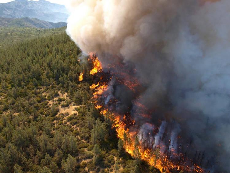 U 95 posto slučajeva uzročnik nastanka šumskih požara je čovjek, a tek u malim procentima su to udar groma, ekstremne temperature ili drugi uzročnici.