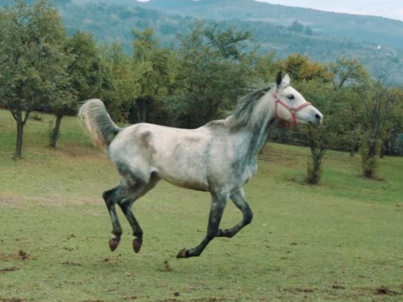 Detalj iz video-klipa Životinje